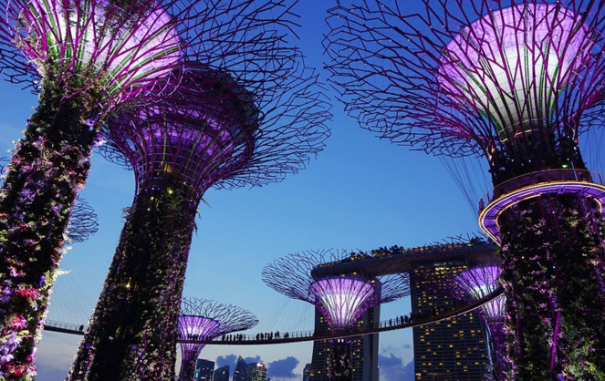 Supertrees in Garden by the Bay - Singapore -  Photo: Signe Cecilie Jochumsen