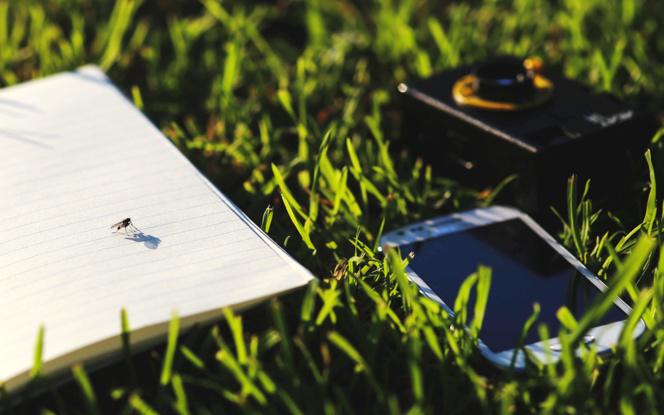 Ecologie et numérique deux transitions qui doivent avancer de concert (photo Pixabay)