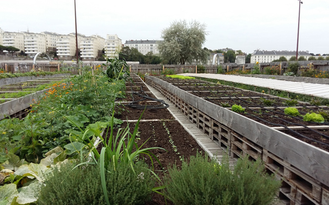 Le Potager de la Cantine à Nantes (Photo Zone Ah!)
