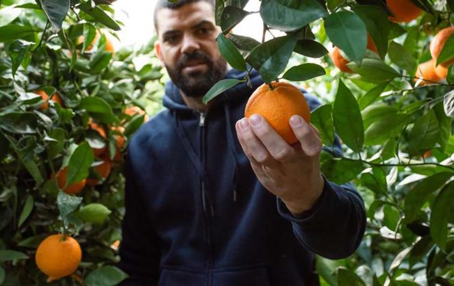 """Les orangers du """"Jardín del Gordo"""" à Villar del Arzobispo (Espagne). Des oranges élevées à maturité, que l'on peut recevoir à domicile, partout dans le monde. (Photo Jardin del Gordo)"""