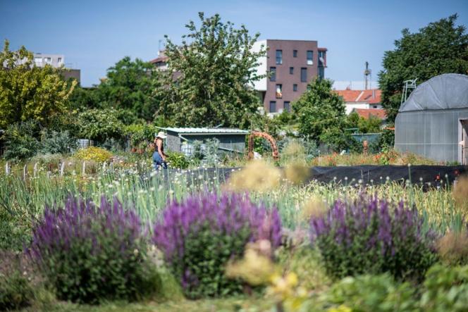 Une ferme urbaine à Saint-Denis, source : Facebook Zone Sensible/Parti Poétique