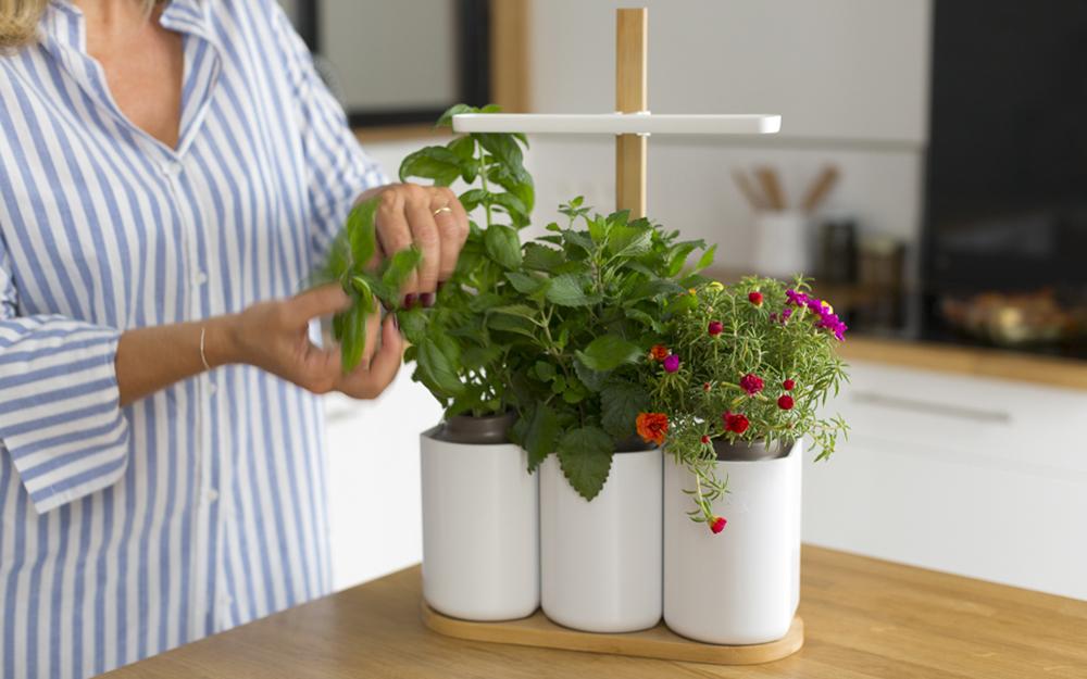 le jardin d'intérieur Smart Lilo ( photo Prête à pousser)