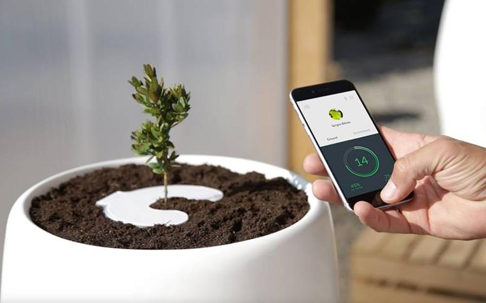 Surveiller le développement d'un arbre de mémoire avec son smartphone, tout un symbole  ... (Photo Bios Urn)