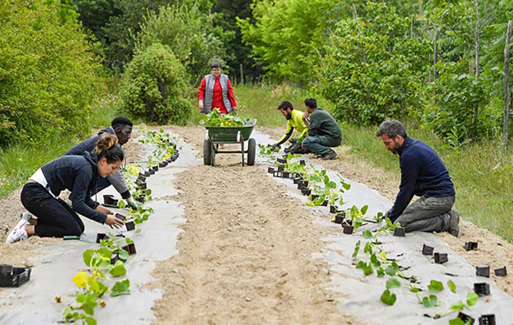Une tonne de pommes de terre et des sillons entiers de courges ont été plantés à la pépinière municipale, avec l'aide des bénévoles de l'association EmpowerNantes (Photo site Nantes Métropole)