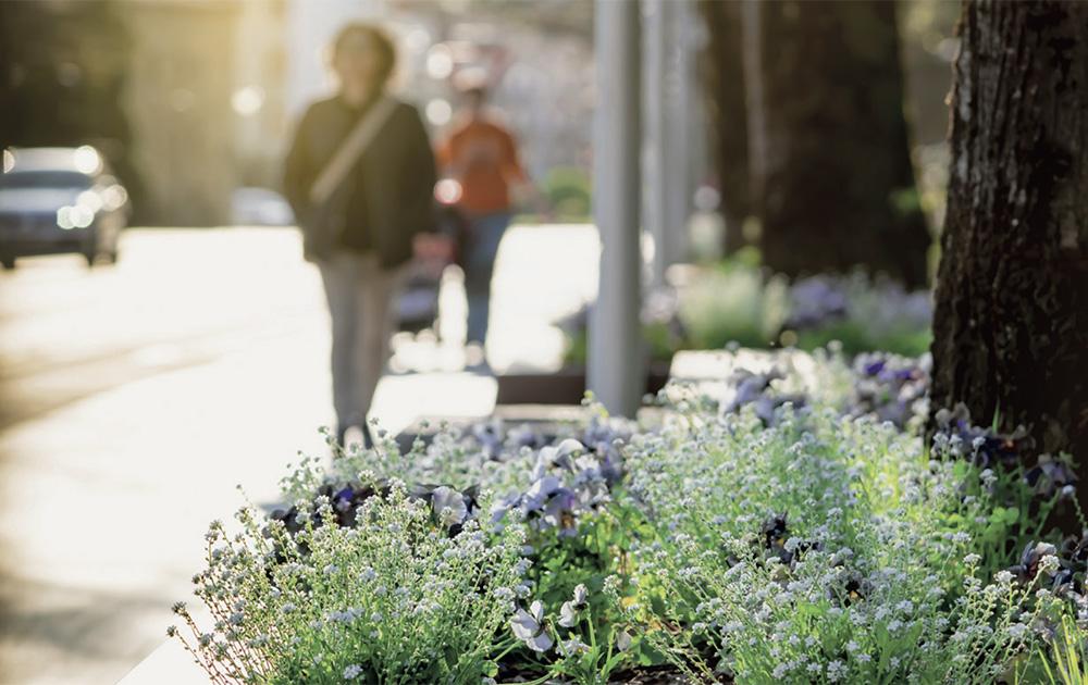 les pieds d'arbre peuvent constituer des lieux privilégiés pour les plantations urbaines (photo Ville de Cusset)
