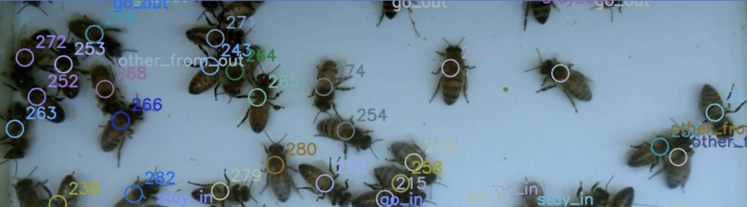 Innovation : BeeGuard compte les abeilles par vidéo embarquée