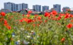 A Saint-Denis : pollinisation en zone urbaine