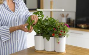 Smart Lilo : un potager connecté dans votre cuisine