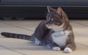 Avec Weenect Cats ne perdez-plus votre chat !