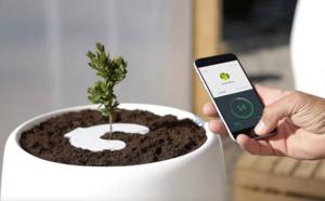 Bios Incube, une urne funéraire connectée qui vous transformera en arbre