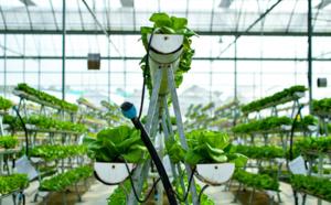 Les fermes urbaines une filière agricole en pleine croissance