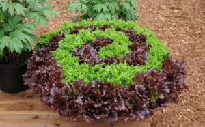 Le Foodscaping :  l'art de cultiver ses légumes en site urbain